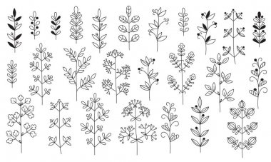 Twigs, leaves. Isolated graceful plants for design. Set of black vector illustrations on a white background. Can be used as a coloring book or as design elements for invitations, greetings, decoration.