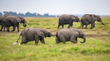 """Картина, постер, плакат, фотообои """"два молодых слона играют вместе в африке, милые животные в парке амбосели в кении модульные"""", артикул 340624154"""