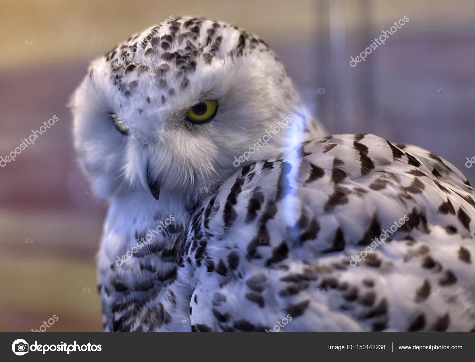 Χαριτωμένο ξανθιά μεγάλο πουλί