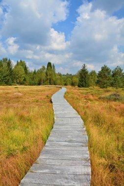 Wood path through the peat bog
