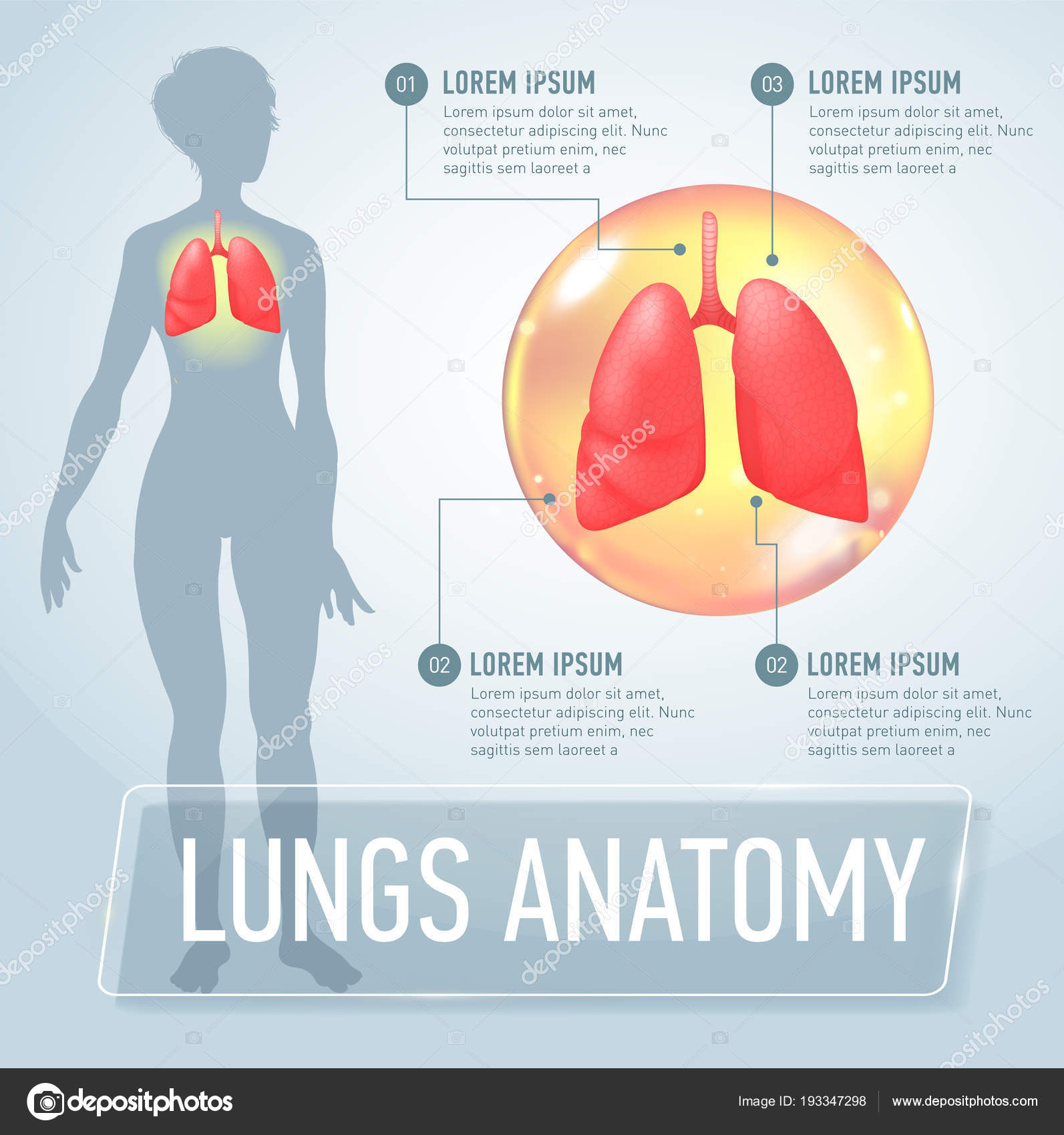 Lung Modern Medical Infographics Internal Organs In A Female Human