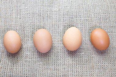 Closeup brown fresh chicken eggs stock vector