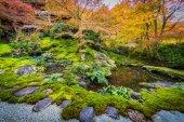 Červené a žluté stromy v japonské zahradě