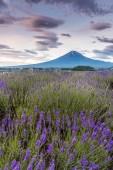 Pohled na horu Fudži a levandulovými poli v letní sezóně na kawaguchiko jezeru