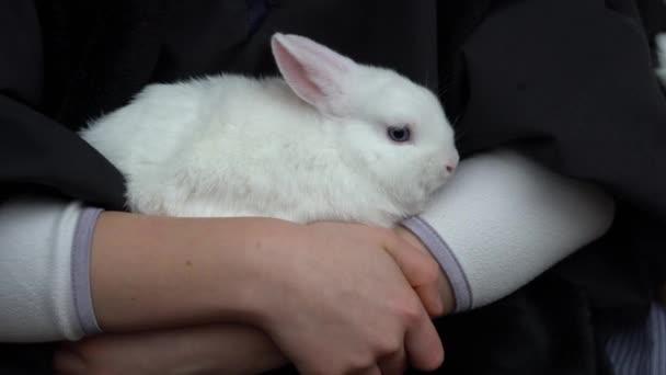 roztomilé bílé domácí králík