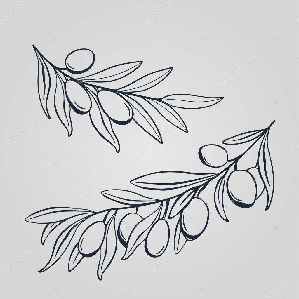 Hand Drawing Olive Branch Hand Drawn Stick Of Oliva Decorative Olives Sketch Herb Leaf Outline Template For Engraving Premium Vector In Adobe Illustrator Ai Ai Format Encapsulated Postscript Eps Eps Format