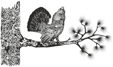 Wood-grouse on a tree.