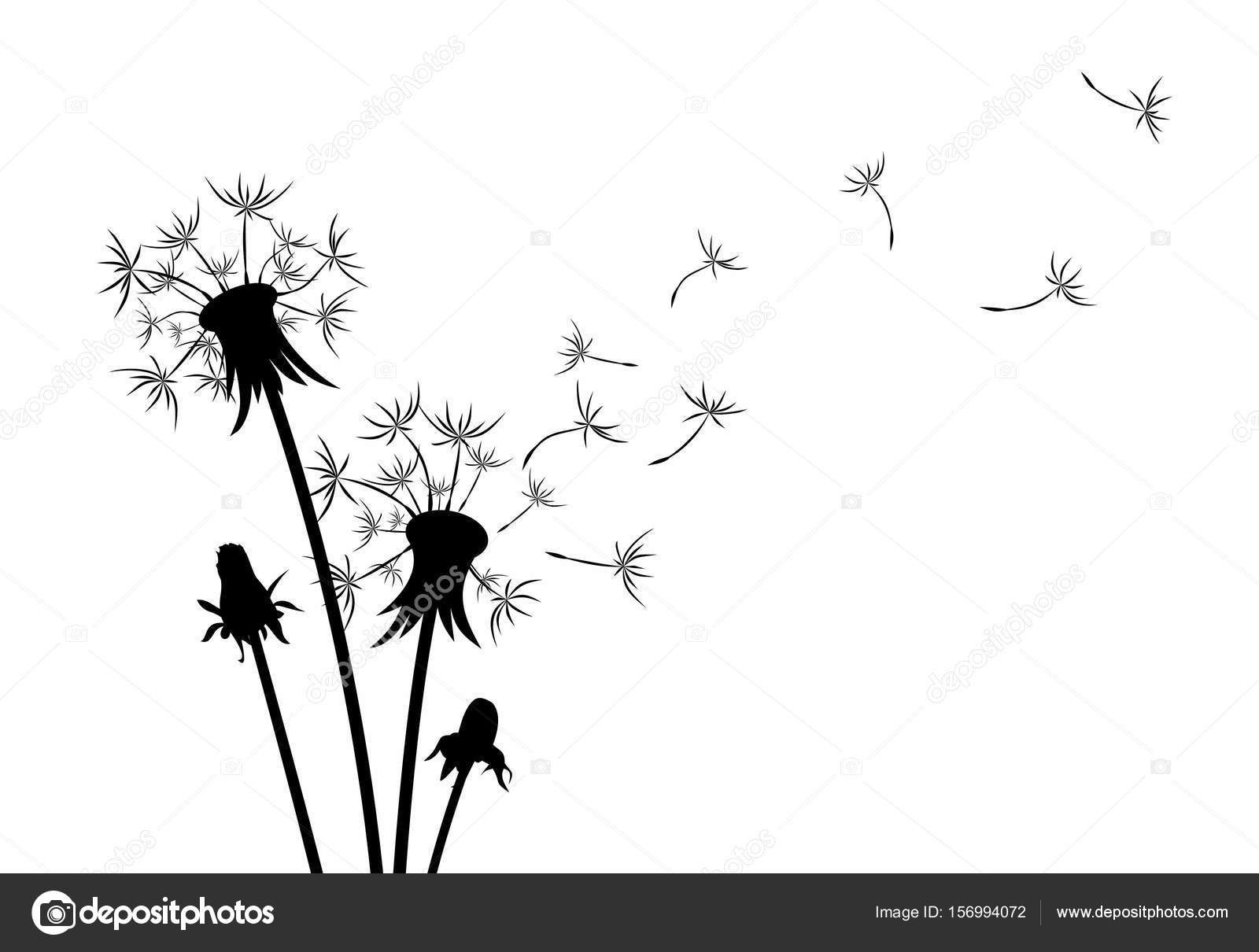 Flower Of Field Dandelion Stock Vector