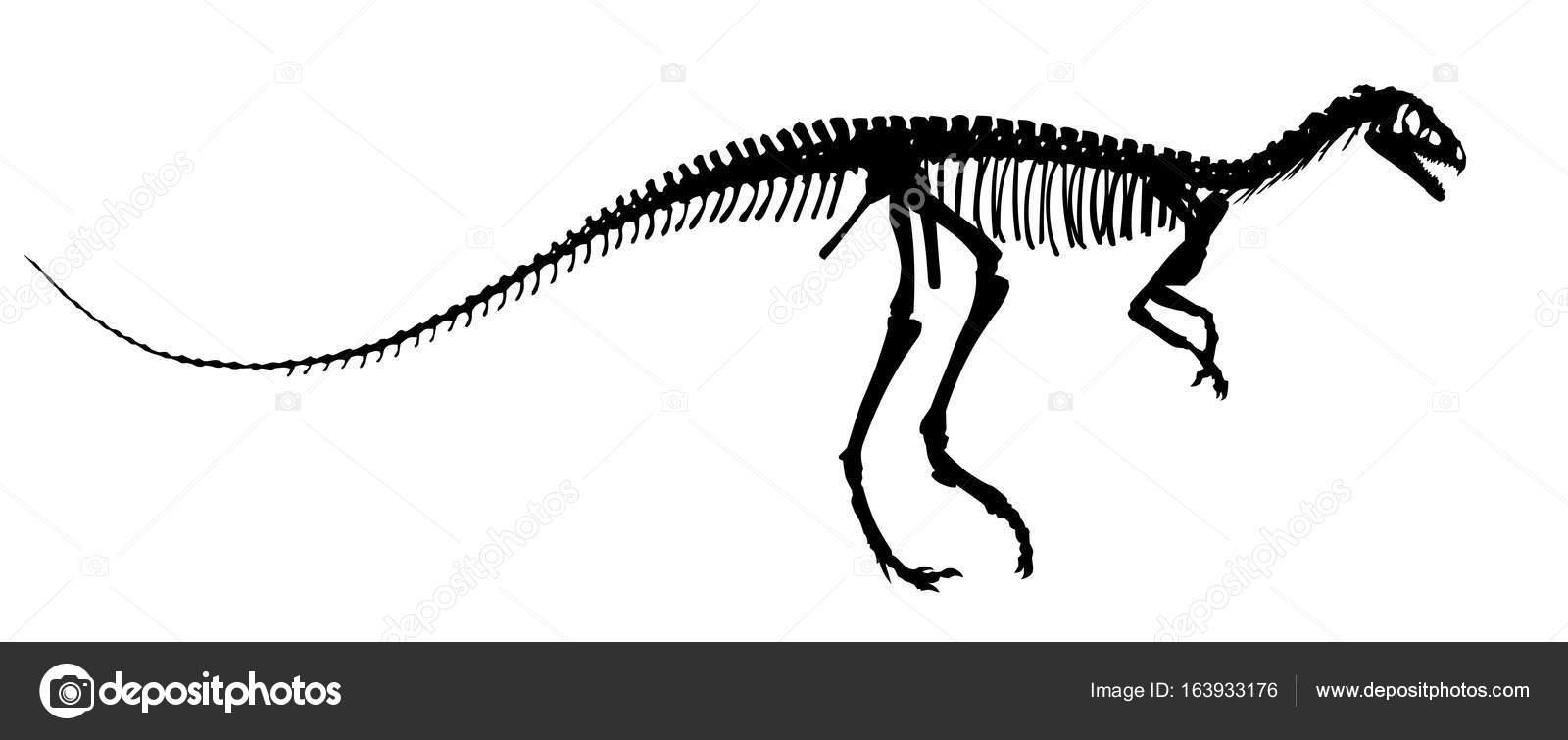 El esqueleto de dinosaurio — Vector de stock © Designer_an #163933176