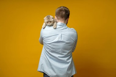 Upset, offended cat, Scottish fold, sitting on the shoulder of the owner. Concept of love for pets.