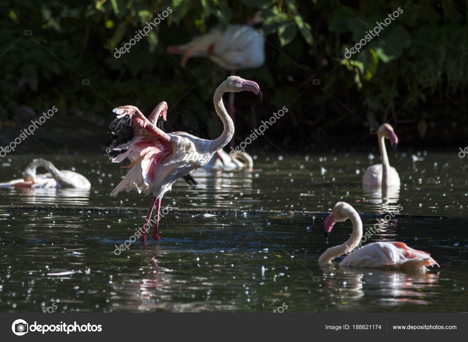 Www velké ptáky fotografie com