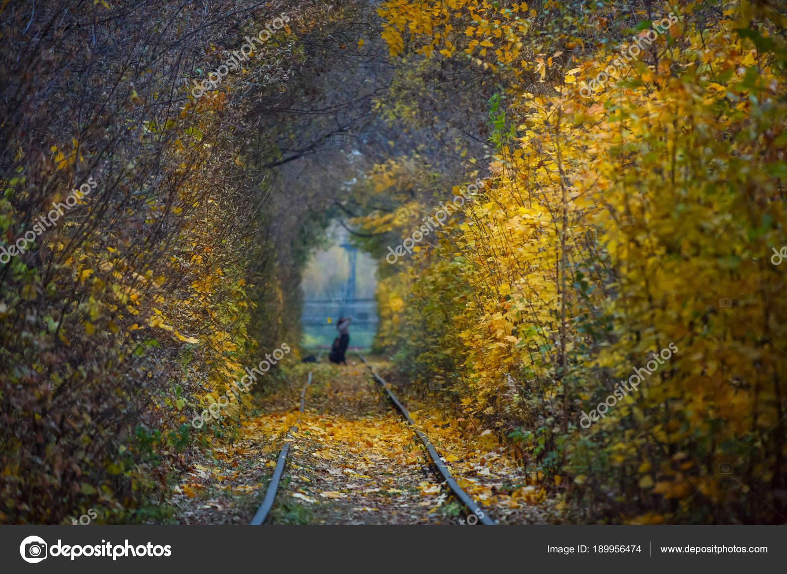 Paisaje De Otoño Caída Camino Túnel De árboles Reales Hermosos