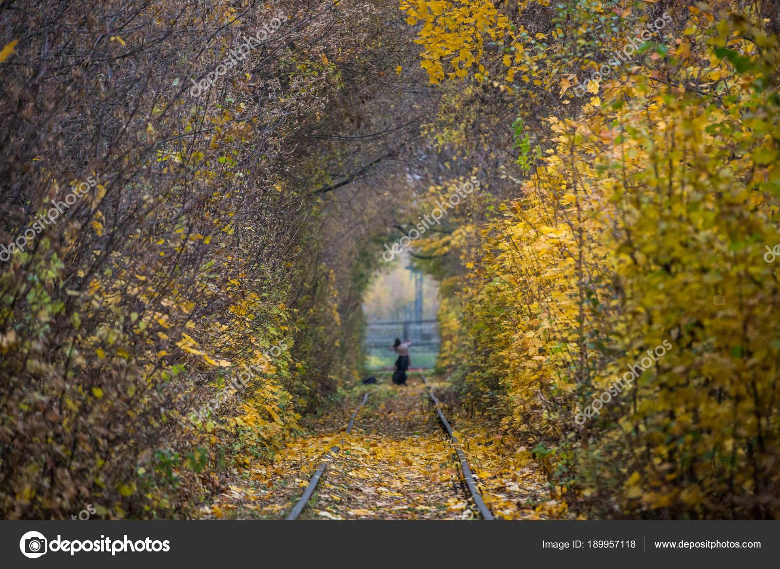 Imágenes Otoño Reales Paisaje De Otoño Caída Camino Túnel De