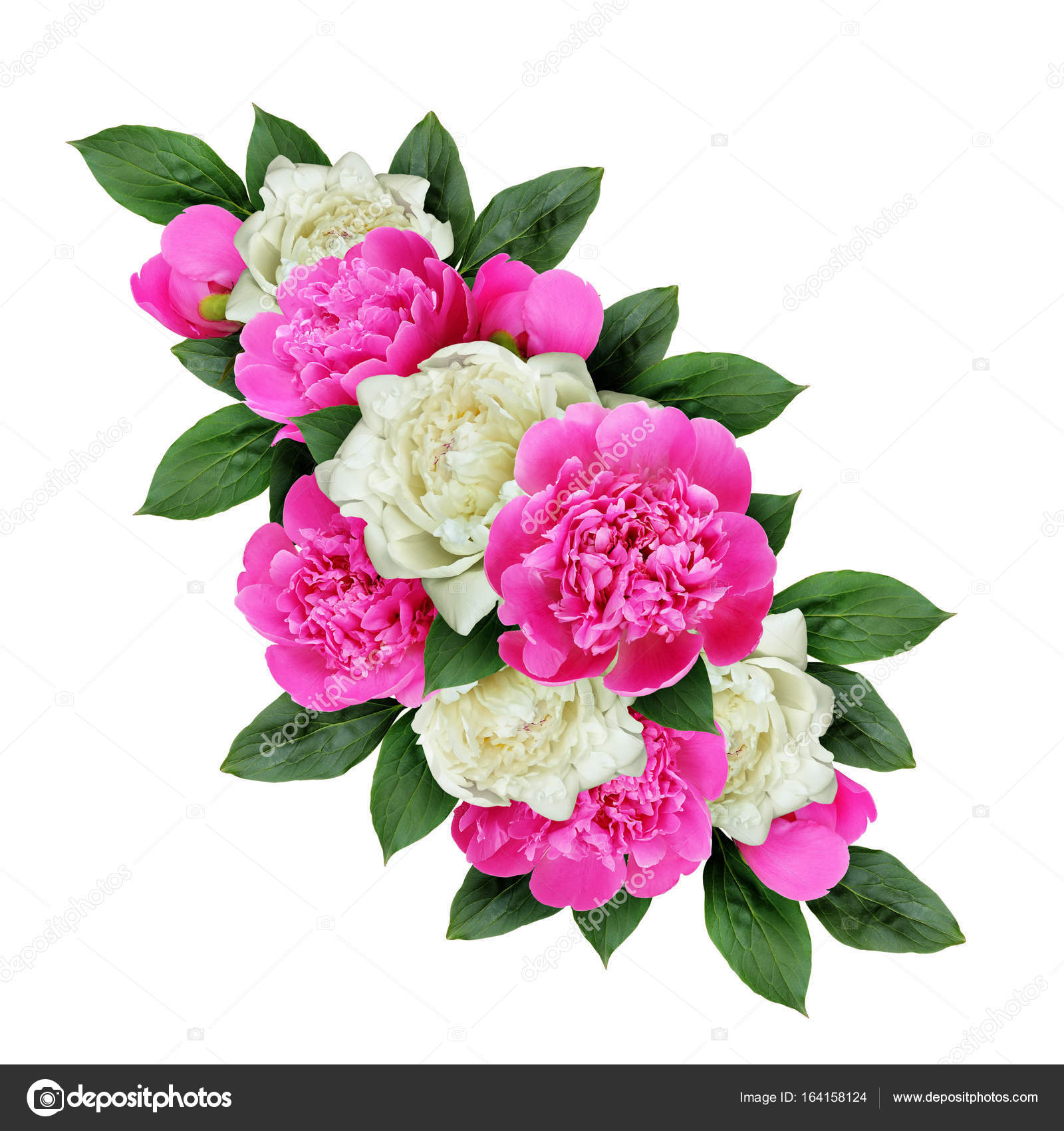 Pink and white peonies flowers arrangement stock photo ksushsh pink and white peonies flowers arrangement stock photo mightylinksfo Image collections