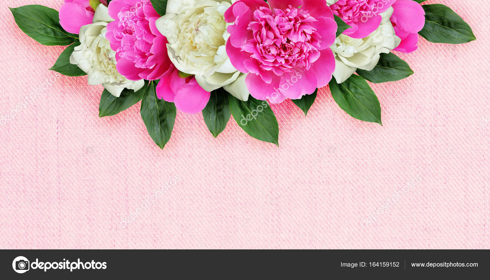 Background With Pink And White Peonies Flowers Stock Photo