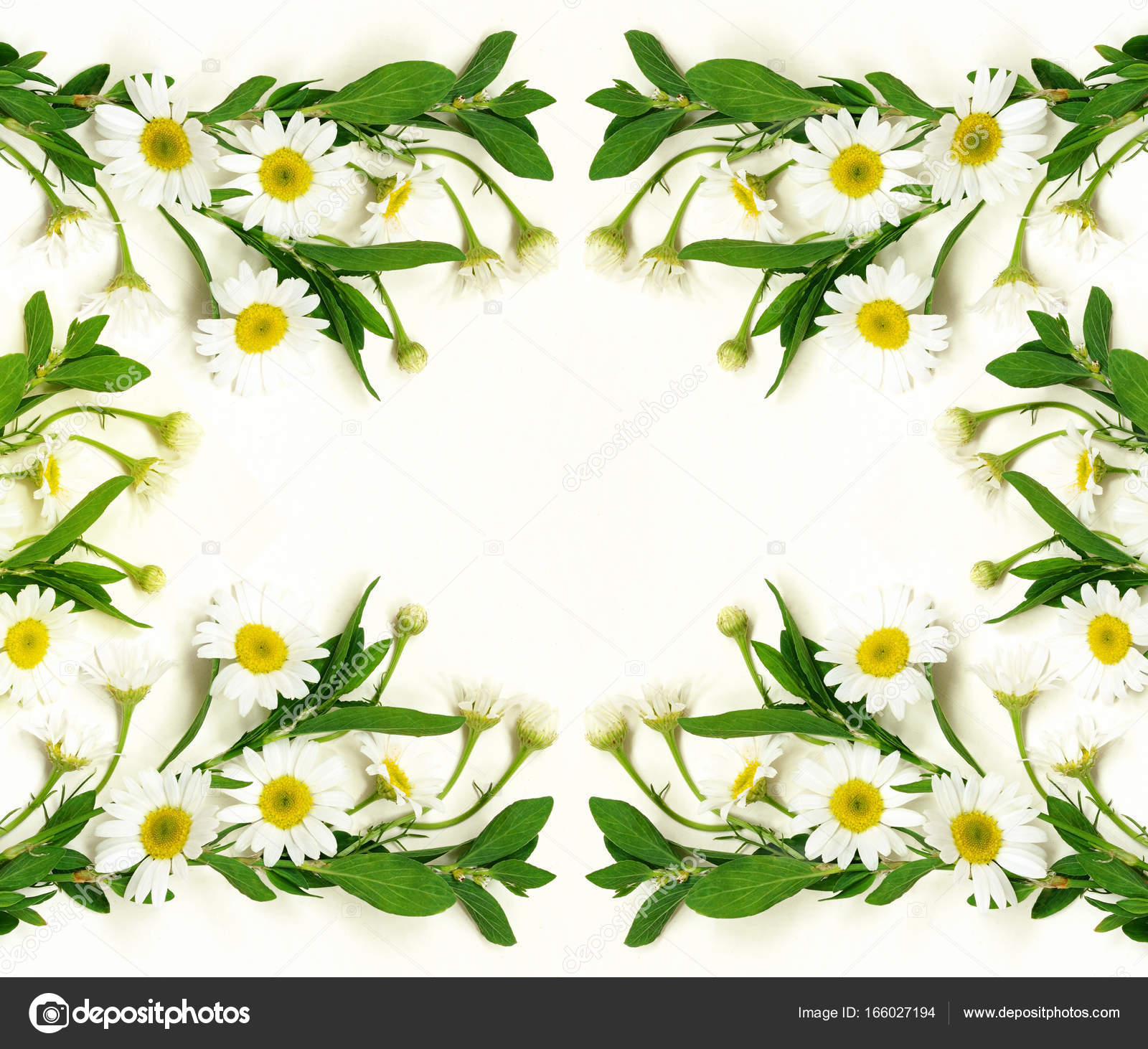 Daisy Flowers Background Stock Photo Ksushsh 166027194