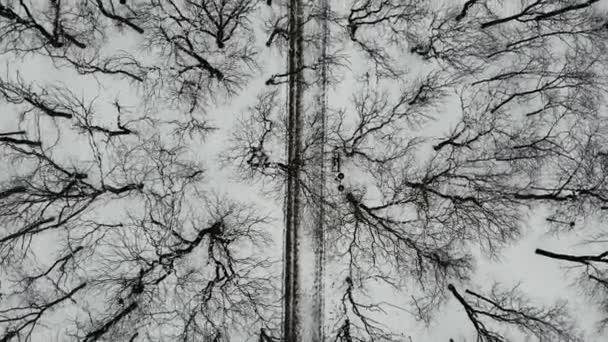 Létání nad stezkou v parku se stromy v zimě, s lidmi kráčejícími po ní