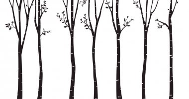 Birch Trees Silhouettes