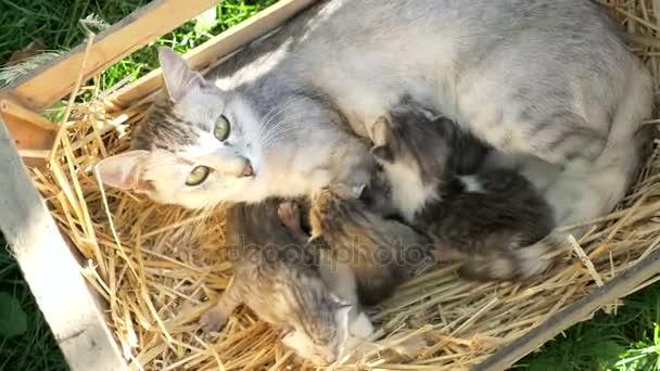 eine Katzenmutter füttert ihre Kätzchen