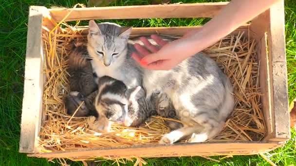 Hand of person stroking cat with kittens