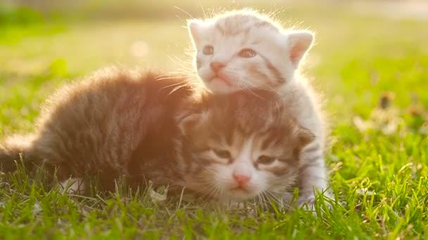 Two tiny nice kittens HD