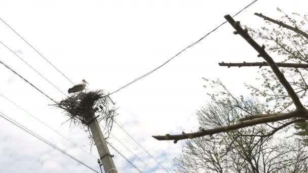 Čáp sedí v hnízdě na elektrický pól s dráty