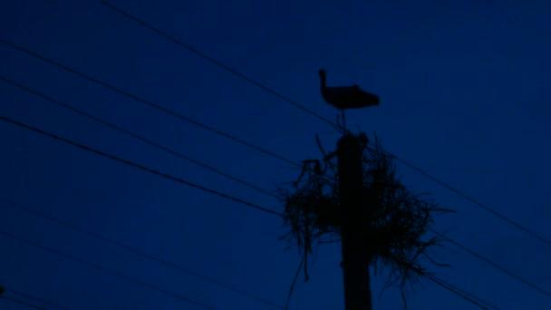 Silueta čápa v noci. Hnízdo na elektrický pól