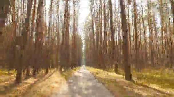 Starý borový les. Krásná dlouhá cesta. Jasné sluneční paprsky. Časová prodleva