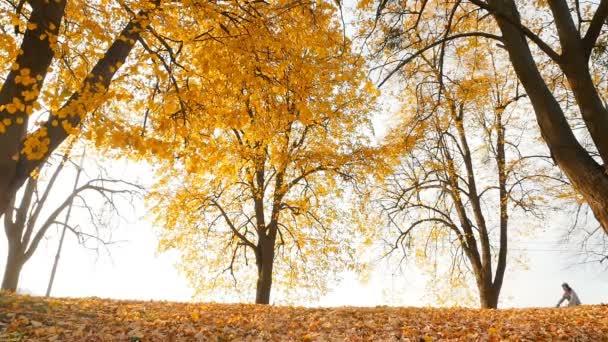 10.15.2019 Ukraine, Kiev VDNH Man rides a bicycle in the park. Beautiful autumn landscape. Slow motion