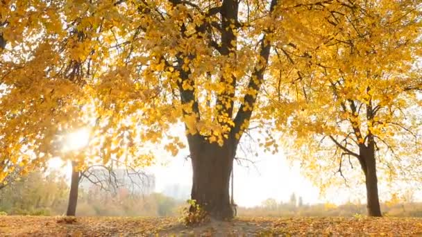 Beautiful autumn landscape. Bright rays of the sun through the leaves of trees. Slow motion