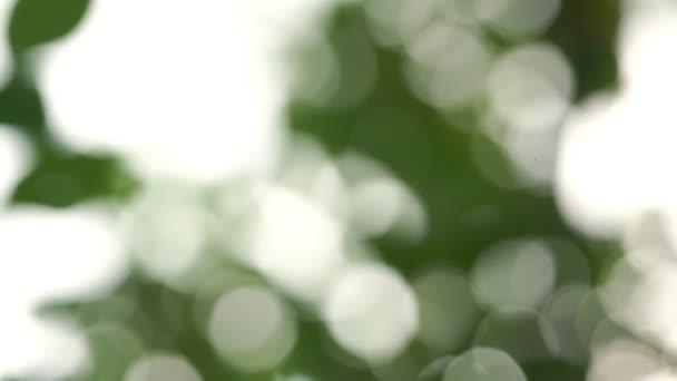 rozmazané zelené listy pohybovat proti obloze zavřít pozadí