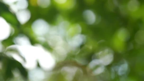 verschwommene grüne Blätter bewegen sich gegen den Zeitlupenhintergrund des Himmels