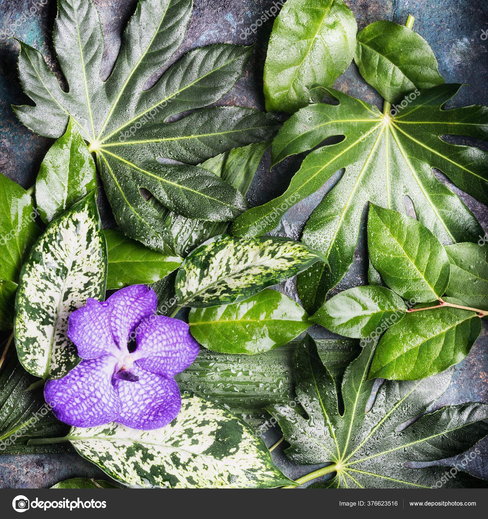 Bunga Anggrek Ungu Dan Berbagai Daun Tropis Basah Alam Latar Stok Foto C Vfotografie 376623516