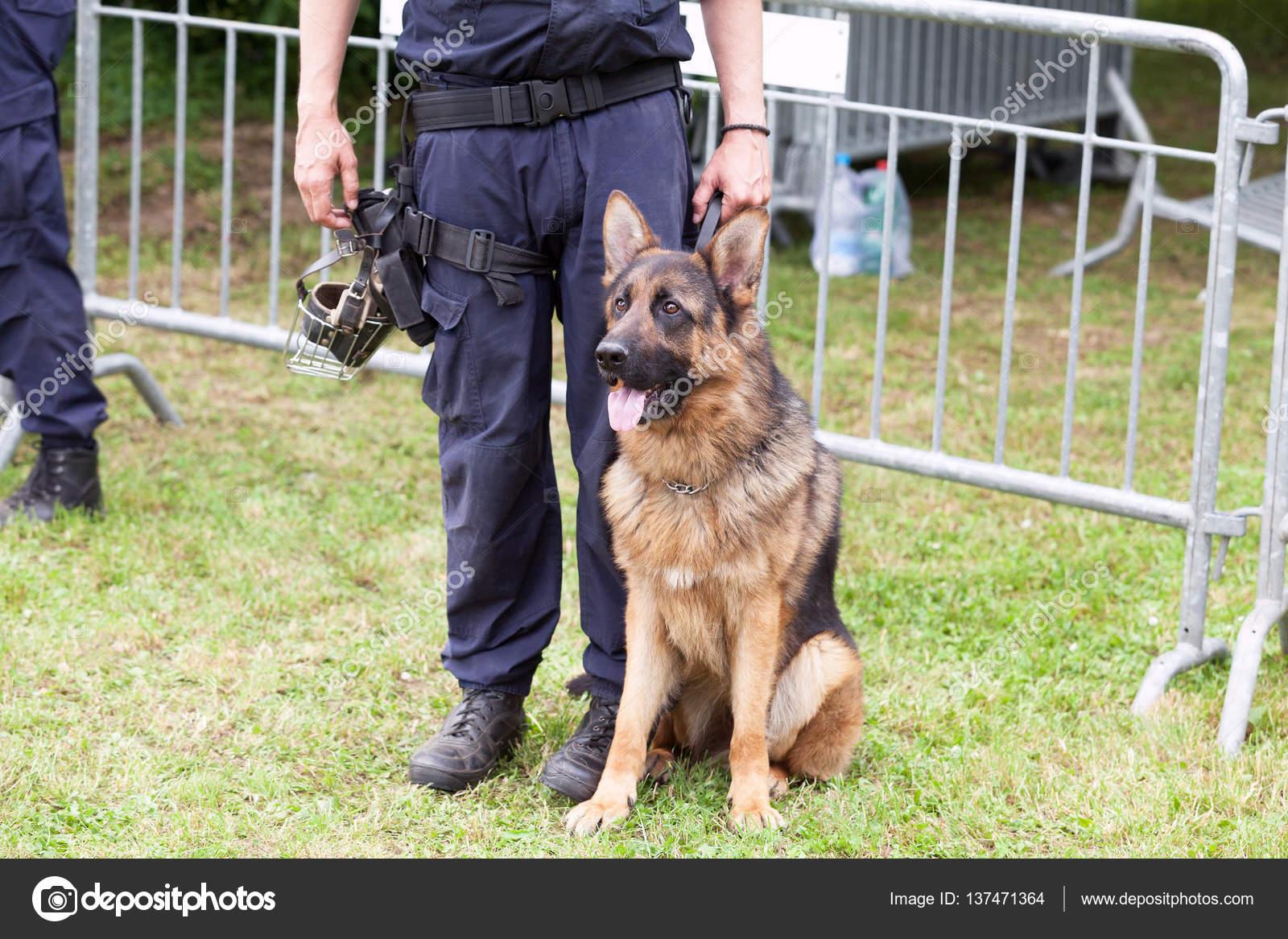 Cane Di Polizia Poliziotto Con Un Pastore Tedesco Di Turno Foto