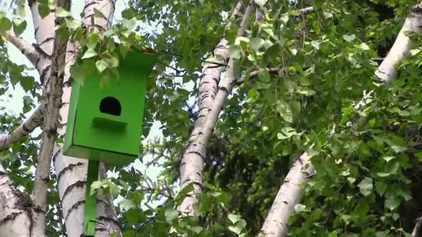 Fából készült zöld birdhouse lóg egy nyírfa nyári nap a Városligetben.