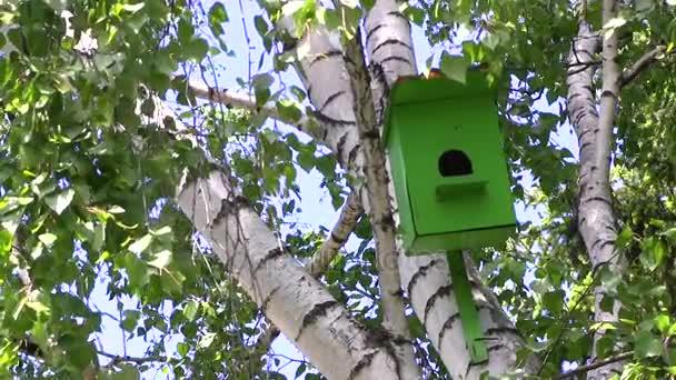 Grünes Vogelhaus aus Holz hängt an einer Birke an einem Sommertag im Stadtpark.