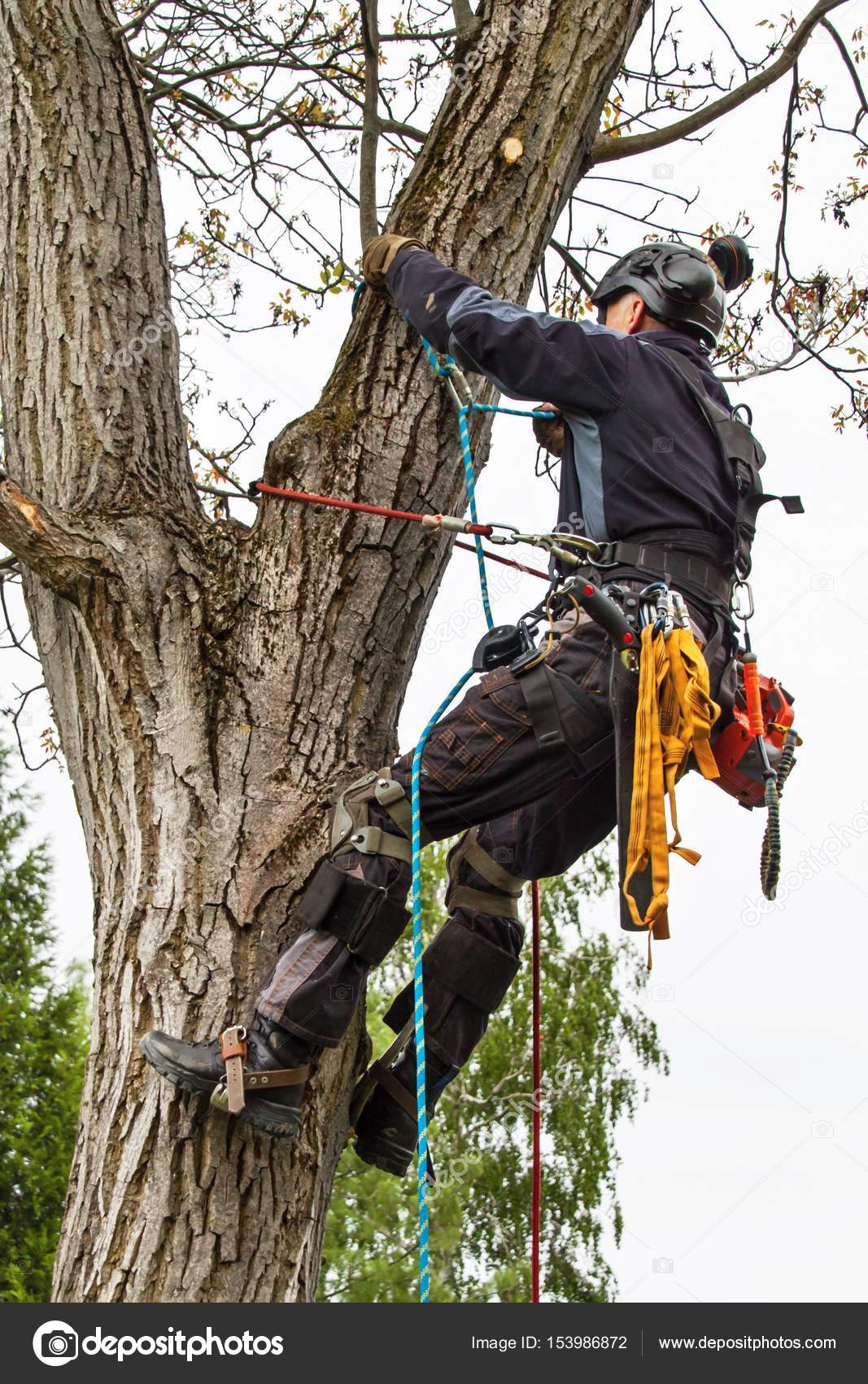 Pole Saw Harness Support Wire Center Belinda39s Alma Doepel Tall Ship Site Arborist Using A Chainsaw To Cut Walnut Tree Lumberjack With Rh Depositphotos Com Husqvarna Mens Fashion
