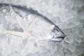 Nyers hal tenger gyümölcsei jégen, Hosszúfarkú tonhal, Keleti megvilágítás