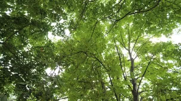 Zelený les listy slunce světlo.