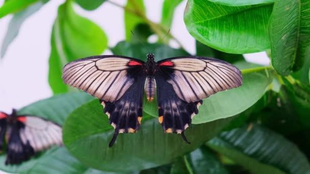 černý motýl rozmazané křídla na pozadí se zeleným listím, zblízka. Kopírovat prostor.
