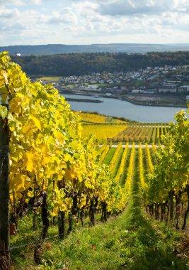 Rhine valley with vineyards