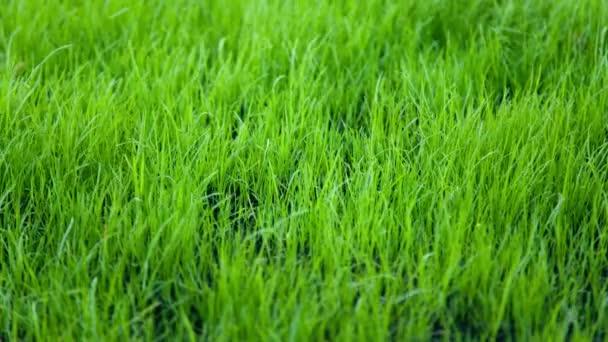 V trávě trávníku vítr mával