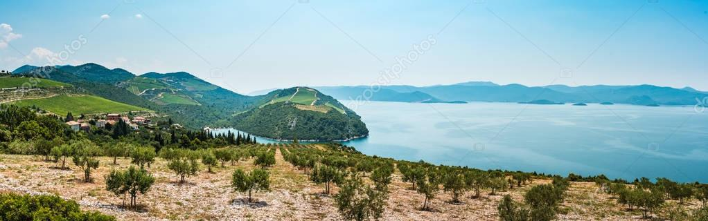 View from the hill on the Adriatic Sea in southern Croatia. Olive plantation in the foreground.