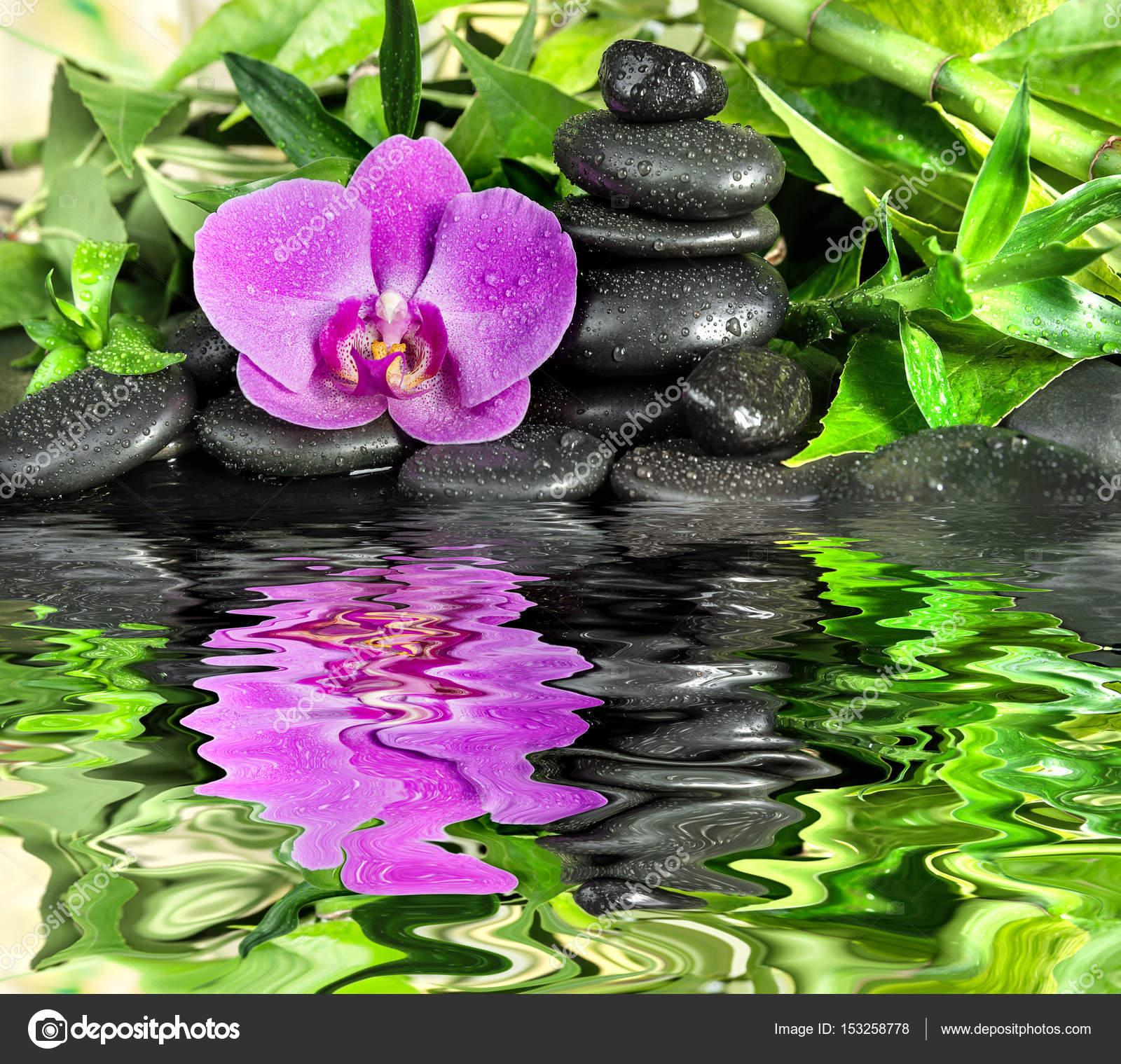 Concetto della stazione termale con le pietre di zen for Orchidea acqua
