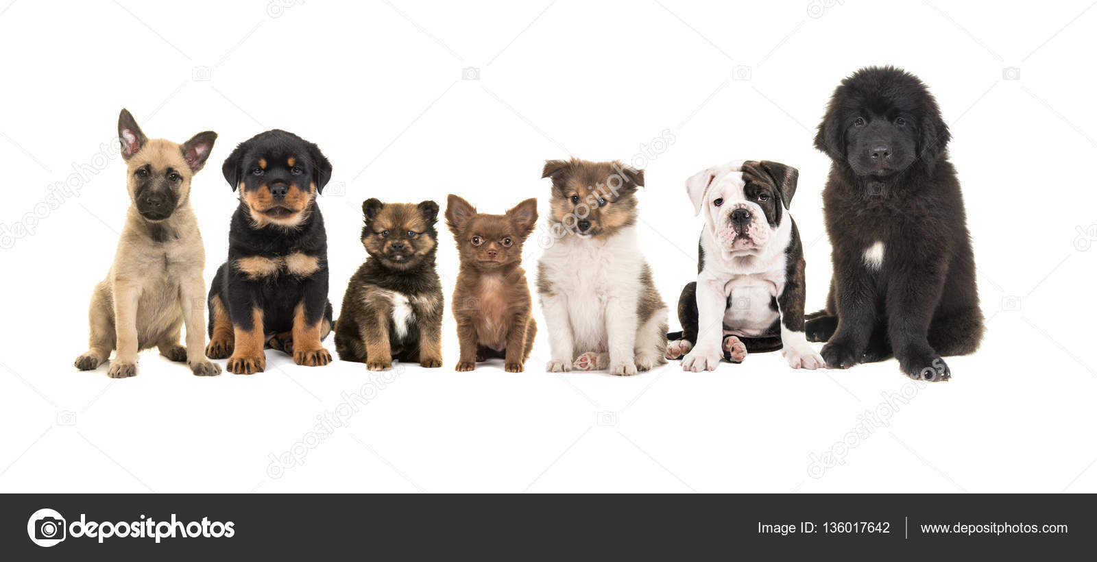 Group Of Zeven Different Puppies On A White Background Stock Photo