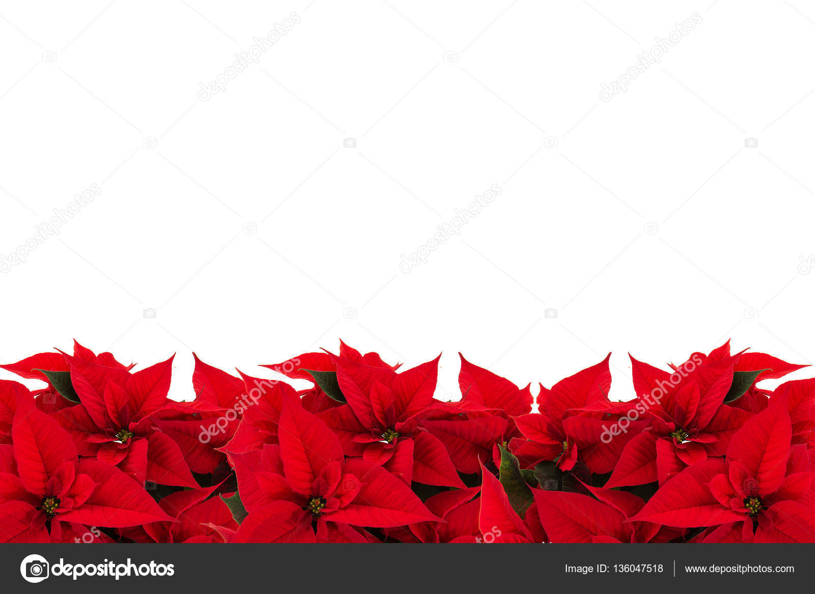 Rahmen Bilderrahmen Rot Weihnachten Blumen — Stockfoto ...