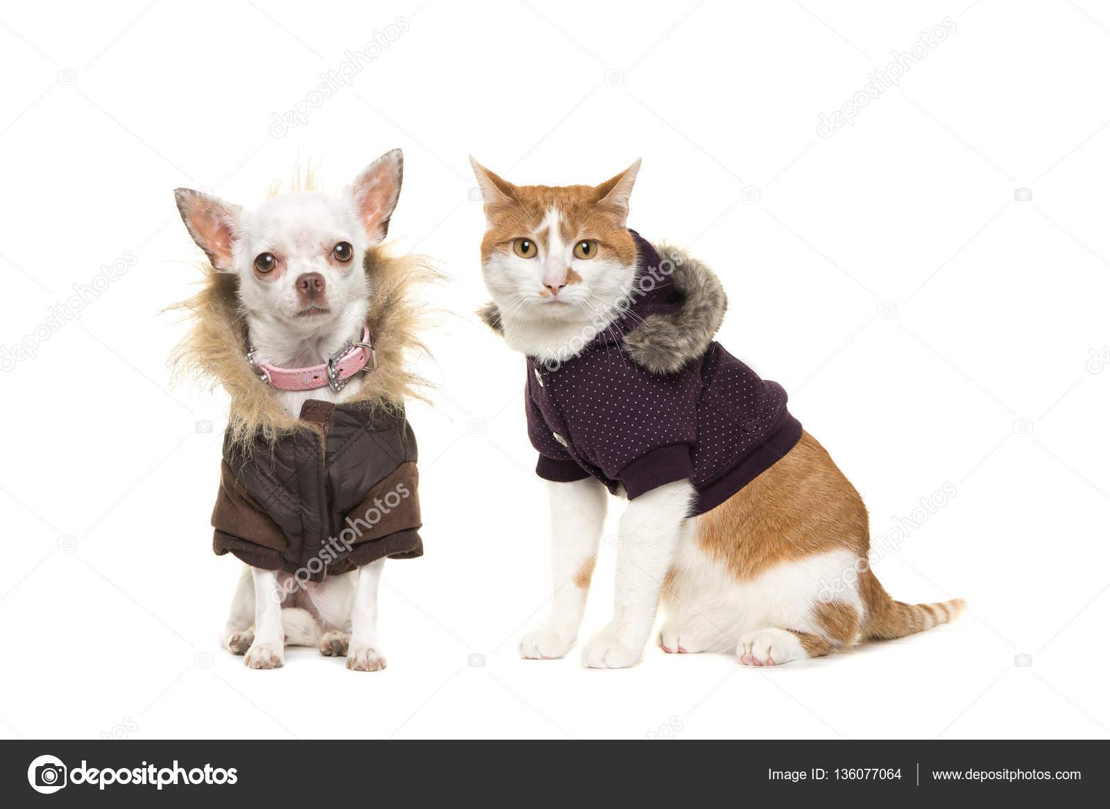7cefa6cf3879 Γάτας και σκύλου στα ρούχα του χειμώνα — Φωτογραφία Αρχείου ...