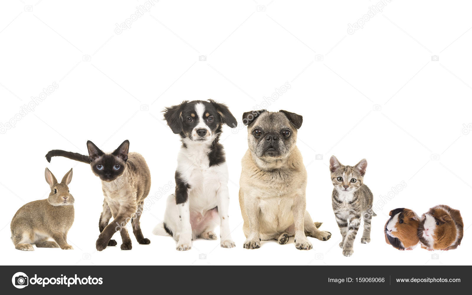 Gruppo Di Varietà Di Animali Domestici E Diverse Età Gatto Adulto