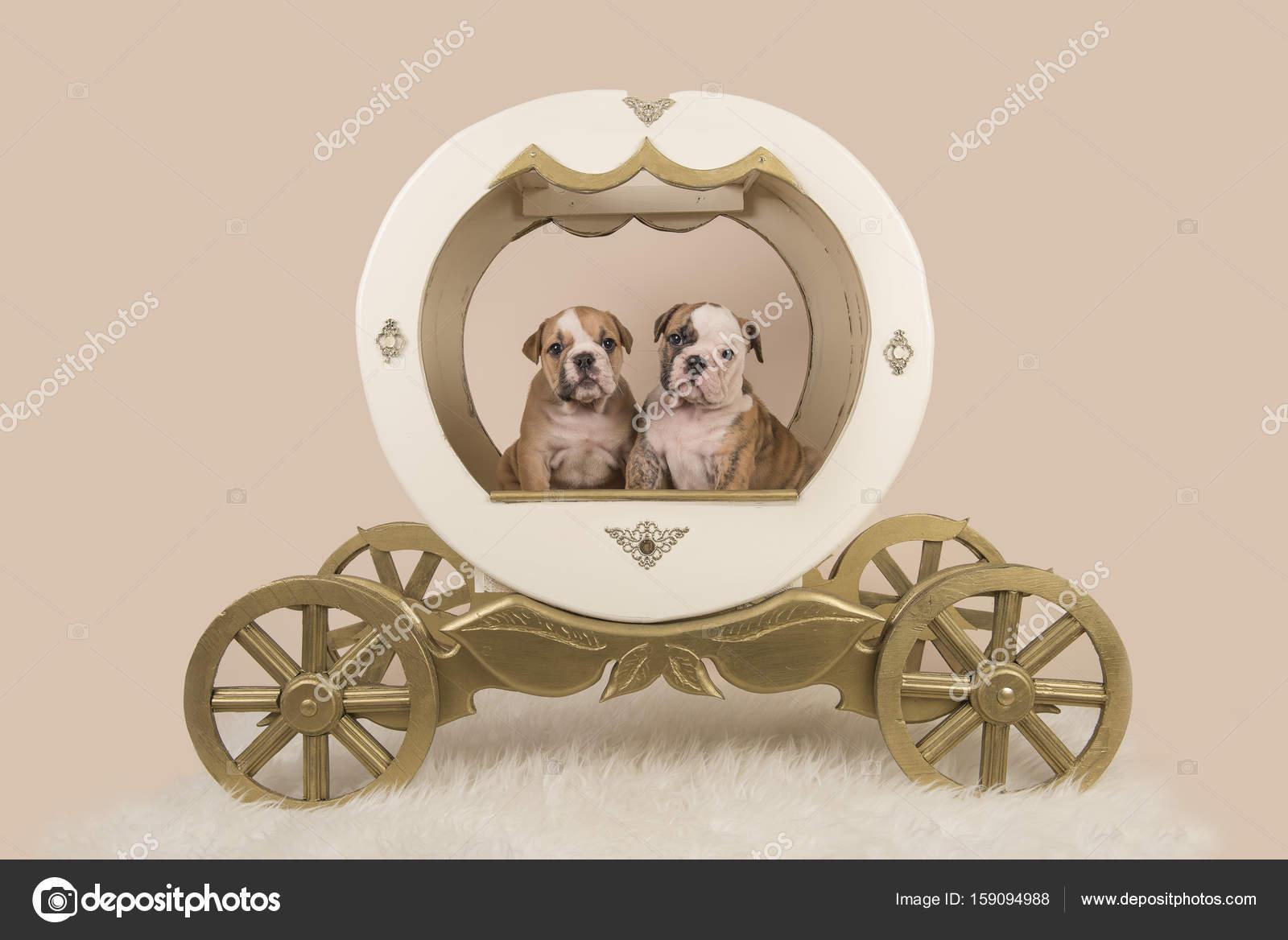 Deux Chiots Bulldog Anglais Dans Un Carrosse De Princesse En