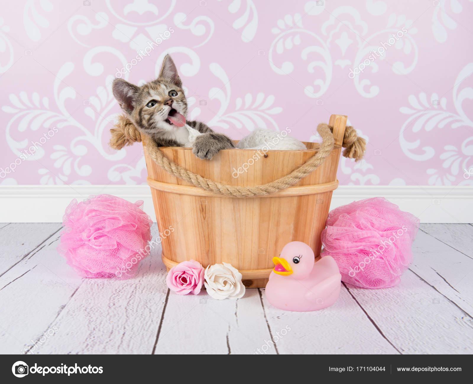 34e96075cb Χαριτωμένο νεαρό γάτα Τάμπι γατάκι σε ένα ξύλινο μπάνιο σε μια ρύθμιση ροζ  μπάνιο — Φωτογραφία